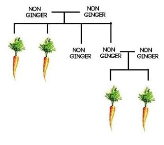 How-does-the-Ginger-Gene-work