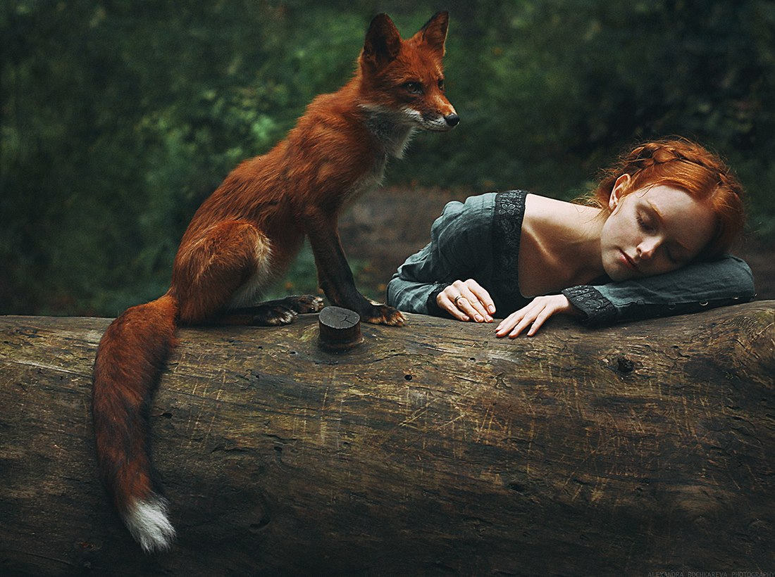 Redhead fox photography2