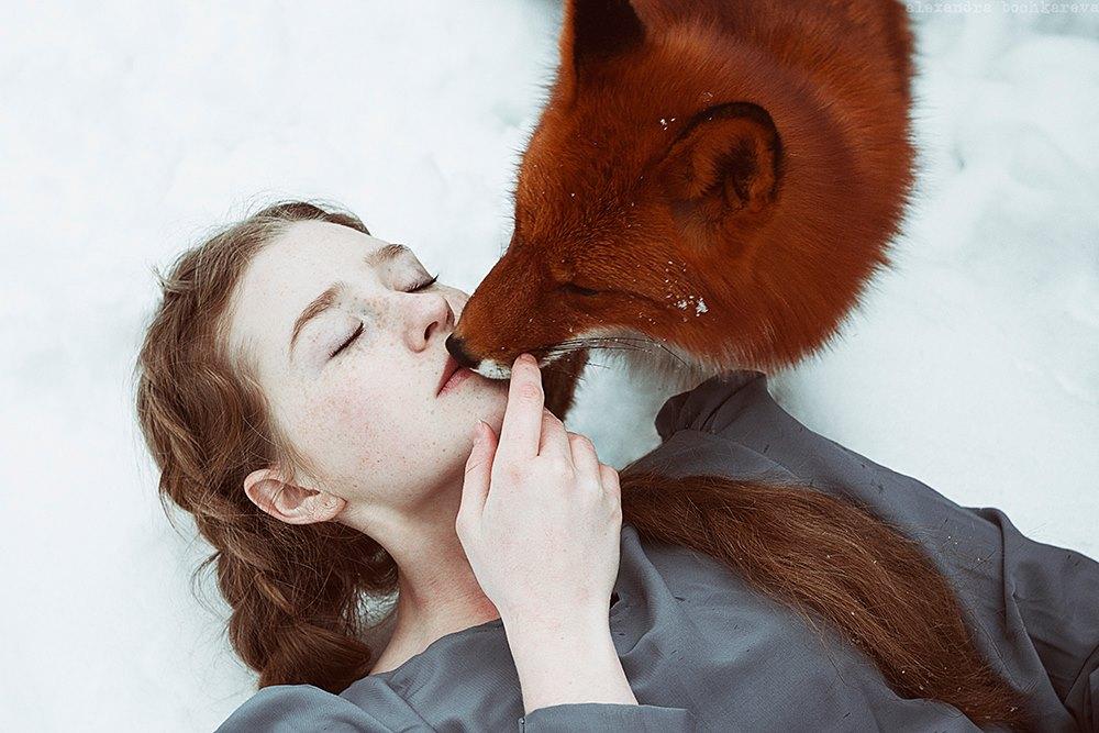 Redhead fox photography6